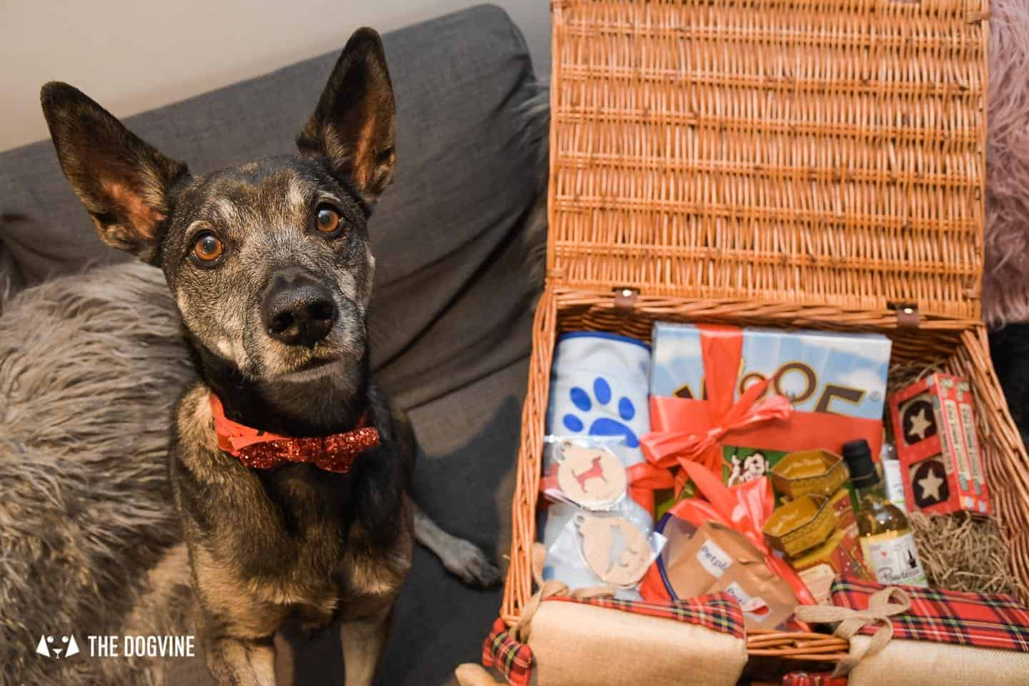 10 Ways For Your Dog's Christmas To Be Fabulous in London - PetPlan Dog Hamper