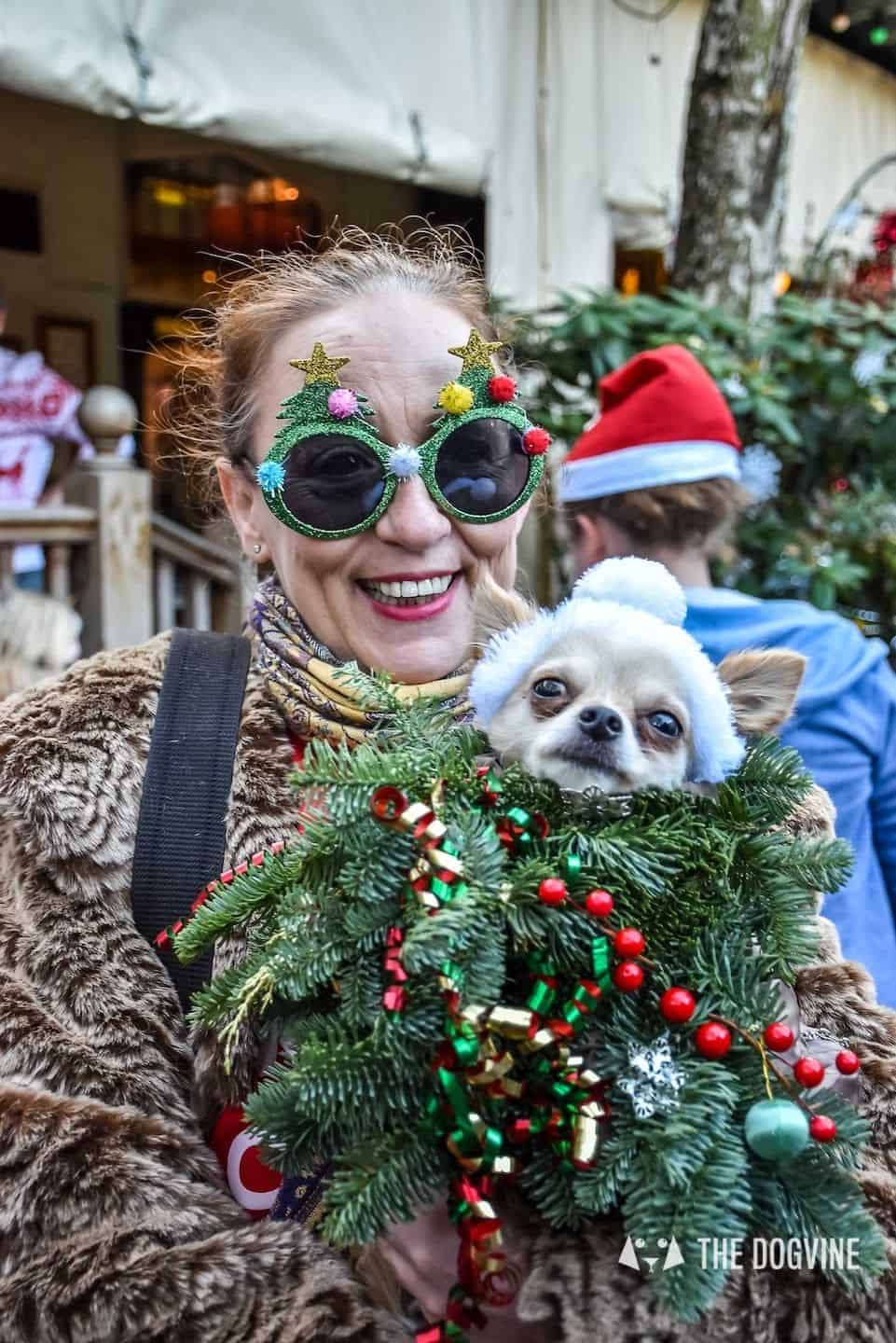 Christmas Markets For Dogs - All Dogs Matter Santa Paws Christmas Fair