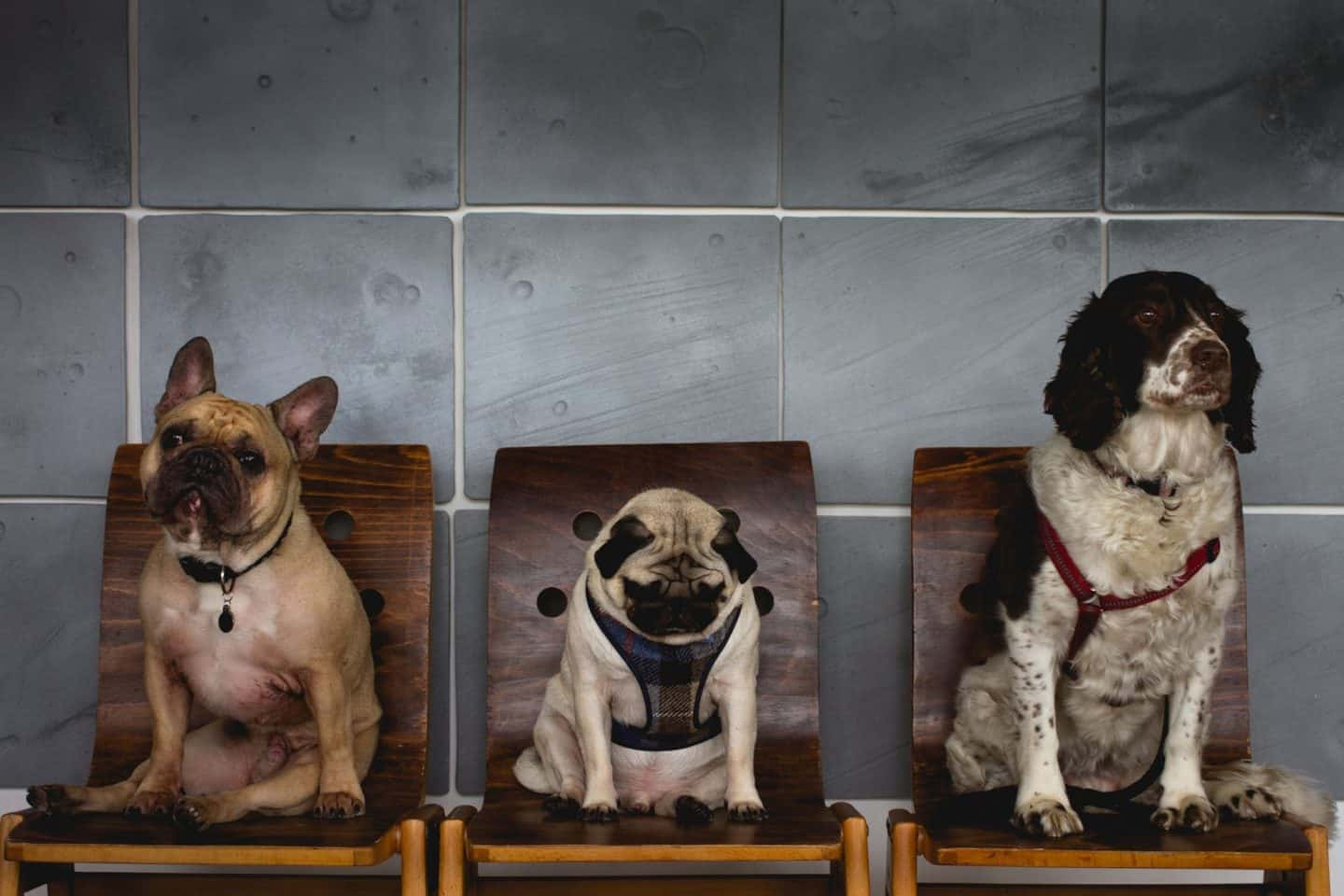 Dine With Your Dog - Best Dog Menus in London - Ace Hotel Shoreditch