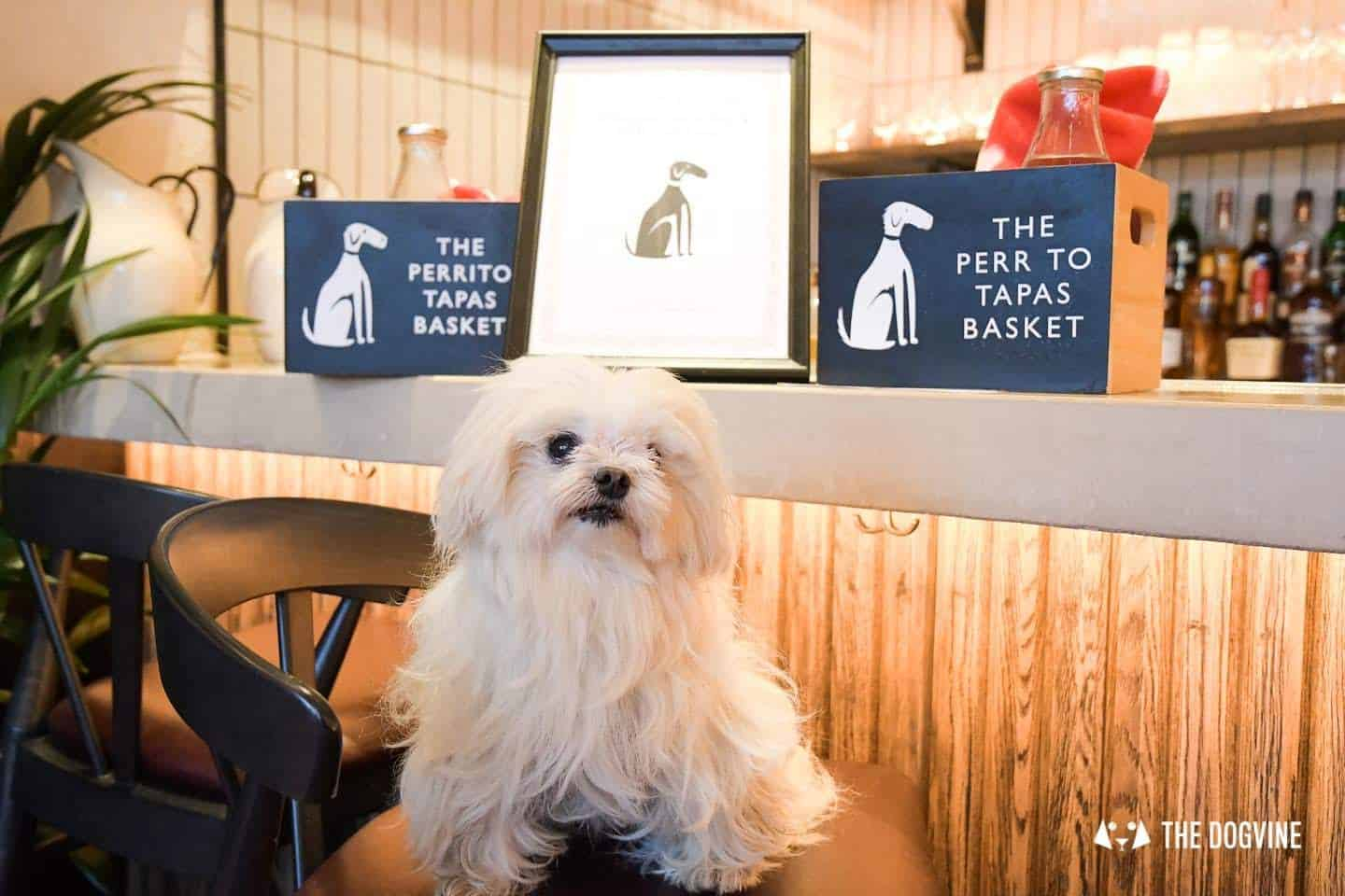 Dine With Your Dog - Dog Menus in London - Brindisa Battersea