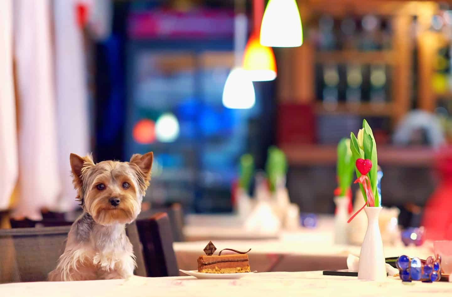 Dine With Your Dog - Pop-up Dog Menus in London