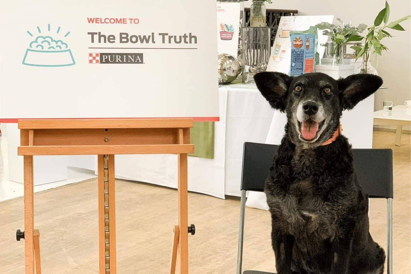 Dog Food Myths Demystified | The Bowl Truth With Purina