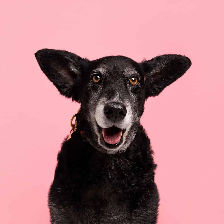 Dog Food Myths - The Bowl Truth - Belinha by Rachel Oates