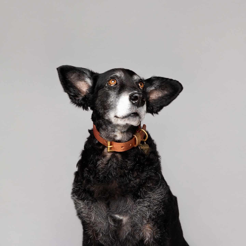 Dog Food Myths - The Bowl Truth With Purina - Belinha by Rachel Oates