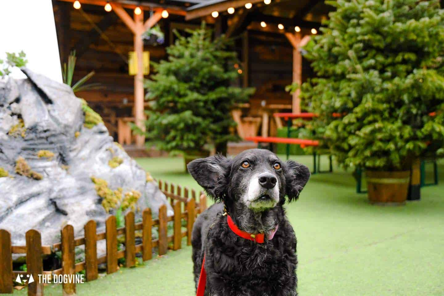 Dog-friendly Christmas Markets in London - Belinha