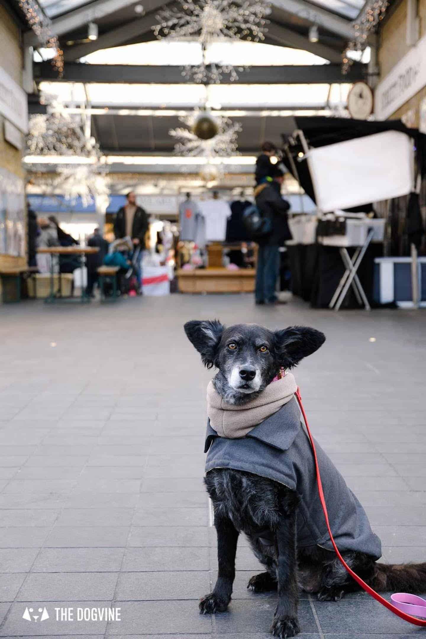 Dog-friendly Christmas Markets in London - Greenwich Market