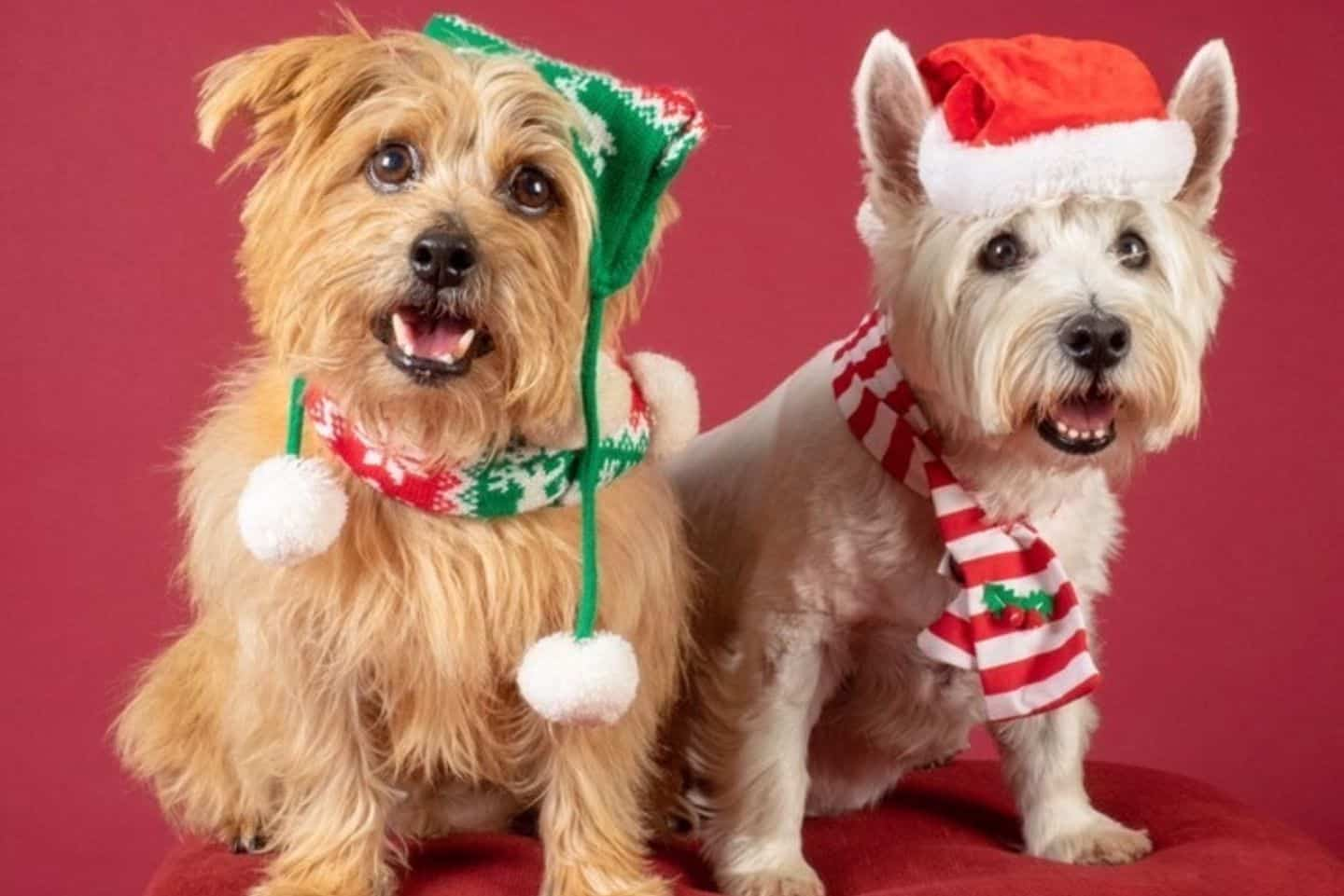 Dog-friendly Christmas Markets in London - Santa Paws