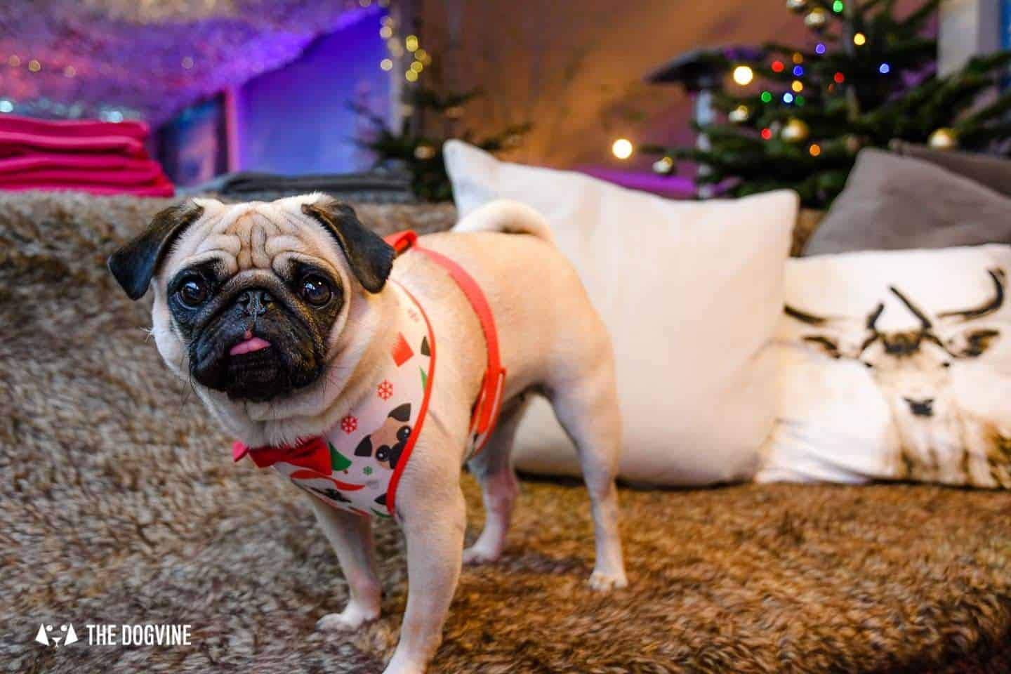 Dog-friendly Christmas Markets in London - Winterland