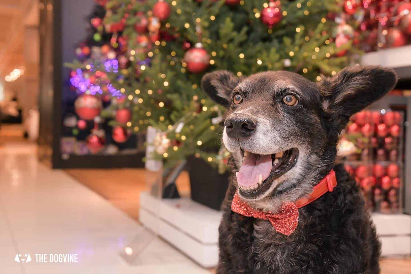 Dog-friendly London at Christmas