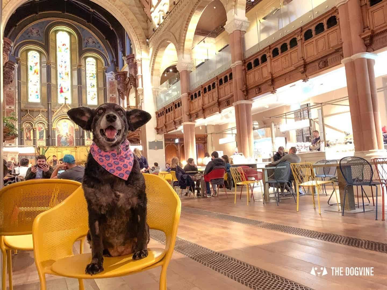 Dog-friendly Mercato Mayfair Food Market In A Church 1