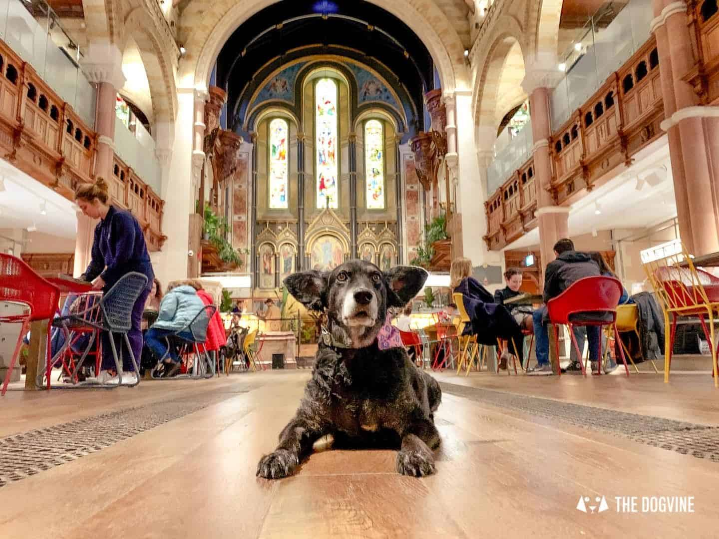 Dog-friendly Mercato Mayfair Food Market In A Church 19