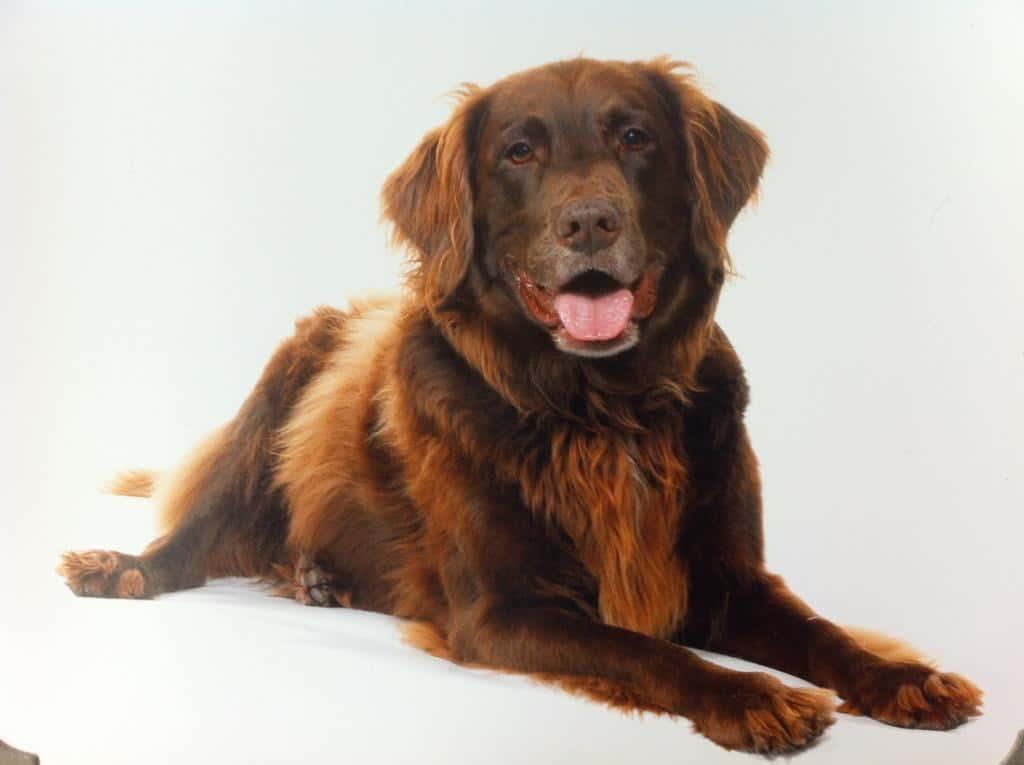Dog-friendly Wags N Tales - Cadbury