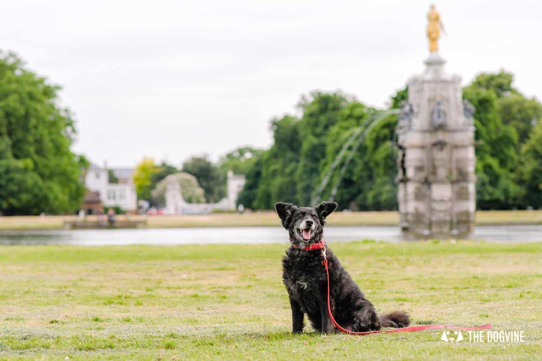 Dogs Love Wags N Tales Surbiton - Dog-friendly Pub Awards 2