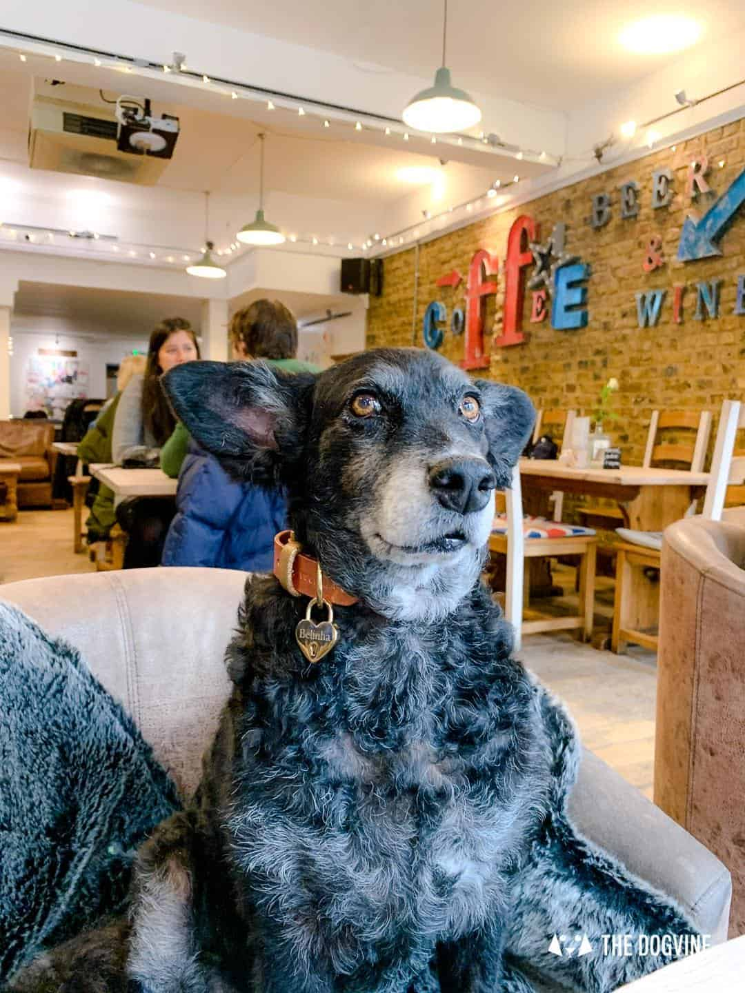 Dogs Love Wags N Tales Surbiton - Dog-friendly Pub Awards 23