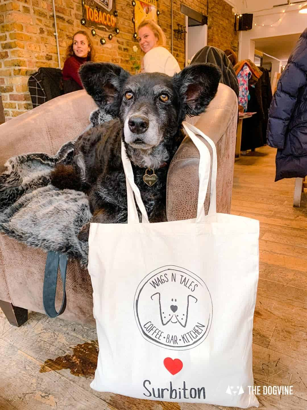 Dogs Love Wags N Tales Surbiton - Dog-friendly Pub Awards 34