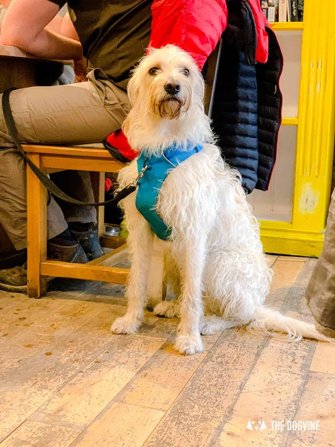 Dogs Love Wags N Tales Surbiton - Dog-friendly Pub Awards 36