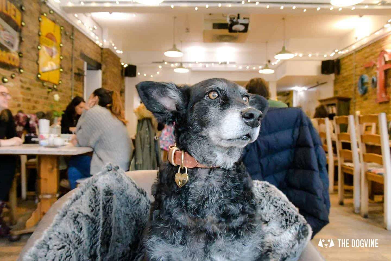 Dogs Love Wags N Tales Surbiton - Dog-friendly Pub Awards 4