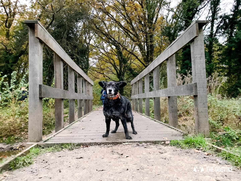 Dogs Love Wags N Tales Surbiton - Dog-friendly Pub Awards 41
