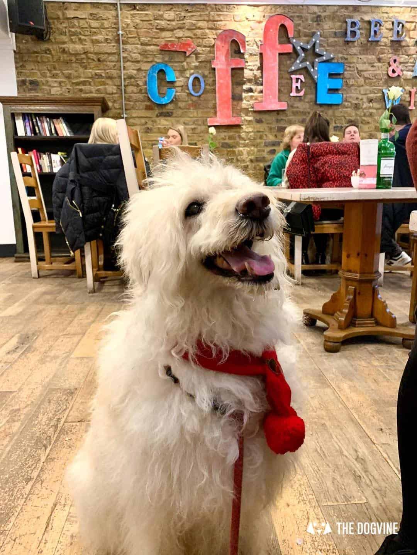 Dogs Love Wags N Tales Surbiton - Dog-friendly Pub Awards 51