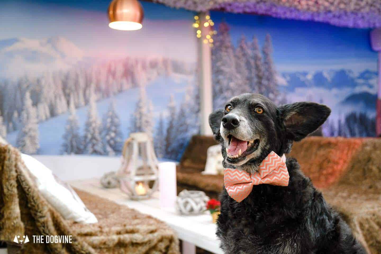 Fabulously Festive Dog-friendly Christmas Markets in London
