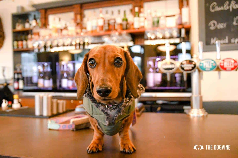Rover Dog-friendly Pub Awards London