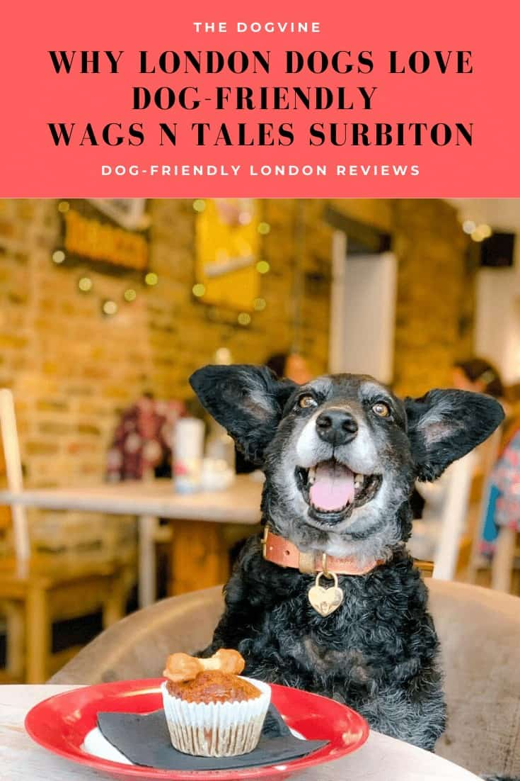 The Dogvine Review Of Dog-friendly Wags N Tales Surbiton