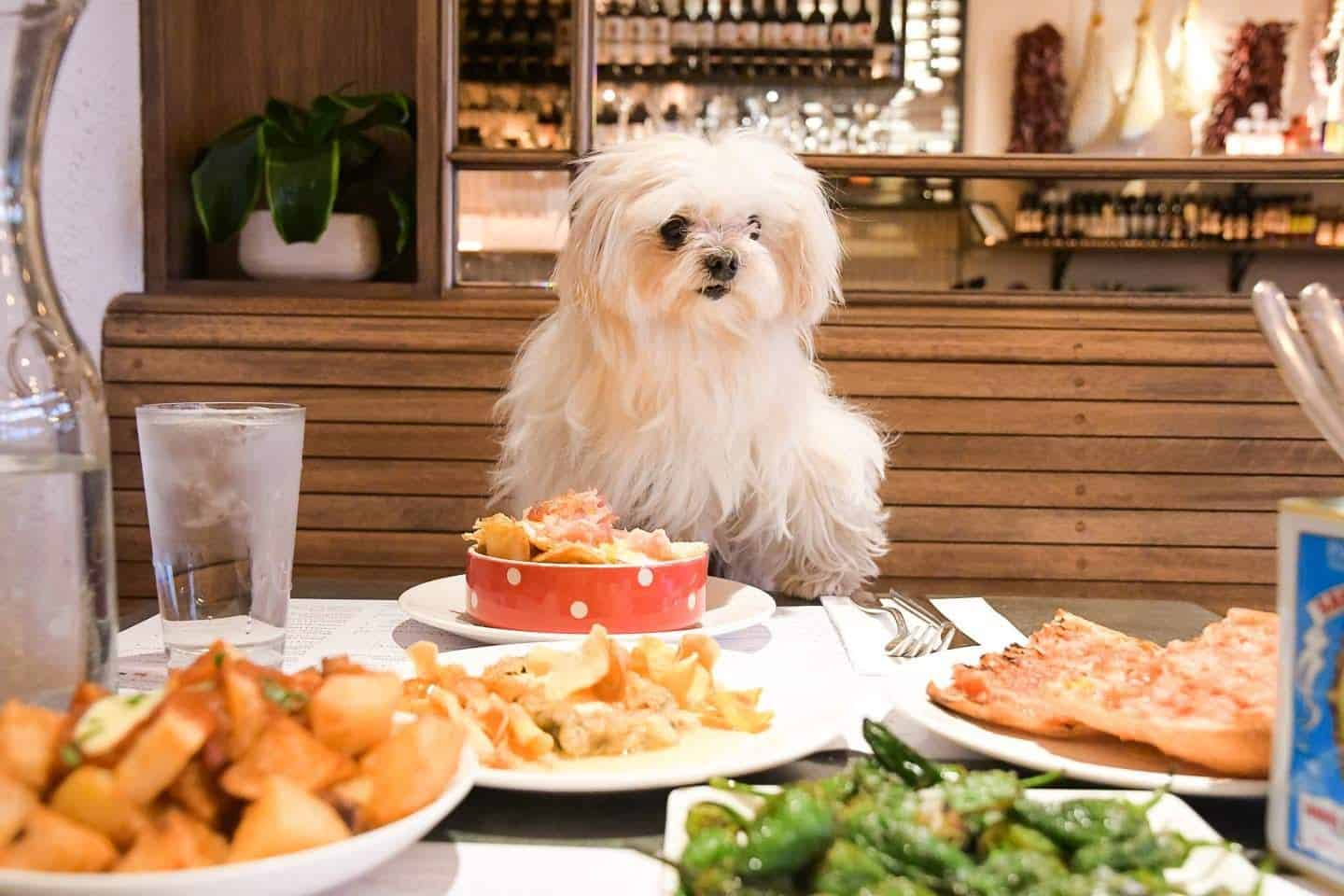 Dine With Your Dog | A Guide To The Best Dog Menus in London