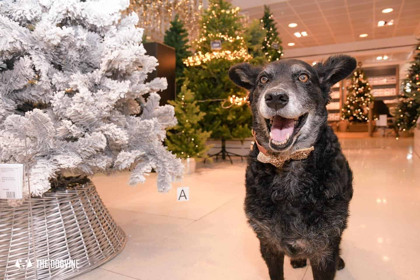 10 Ways For Your Dog's Christmas To Be Fabulous In London - Dog-friendly Peter Jones