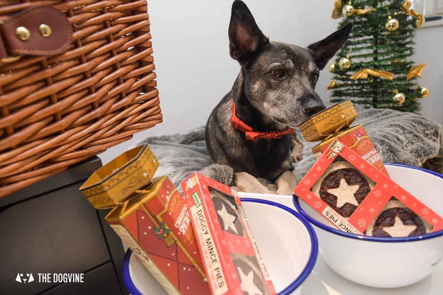 10 Ways For Your Dog's Christmas To Be Fabulous In London - Treats Please