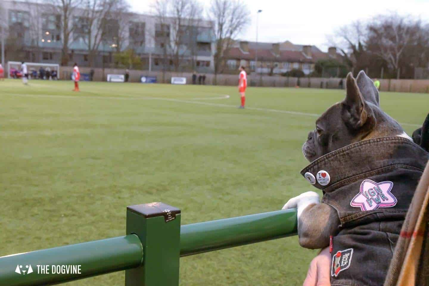 Dog-friendly Football Teams in London 13