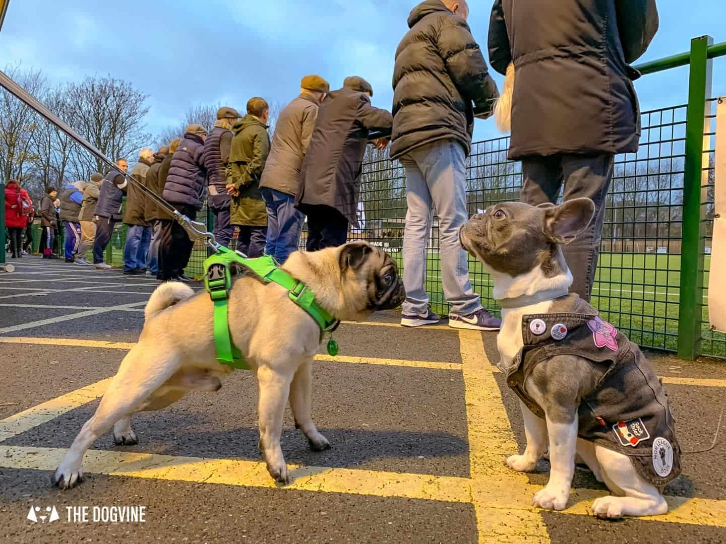 Dog-friendly Football Teams in London 15