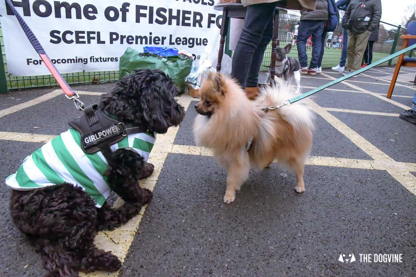 Dog-friendly Football Teams in London 18