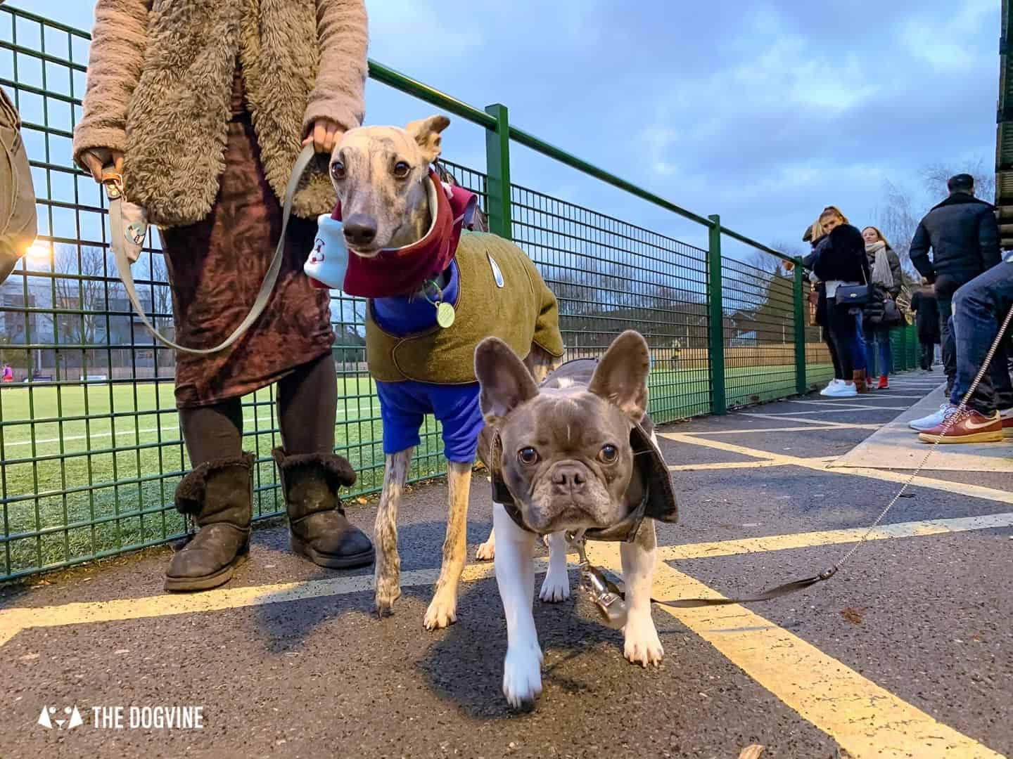 Dog-friendly Football Teams in London 19