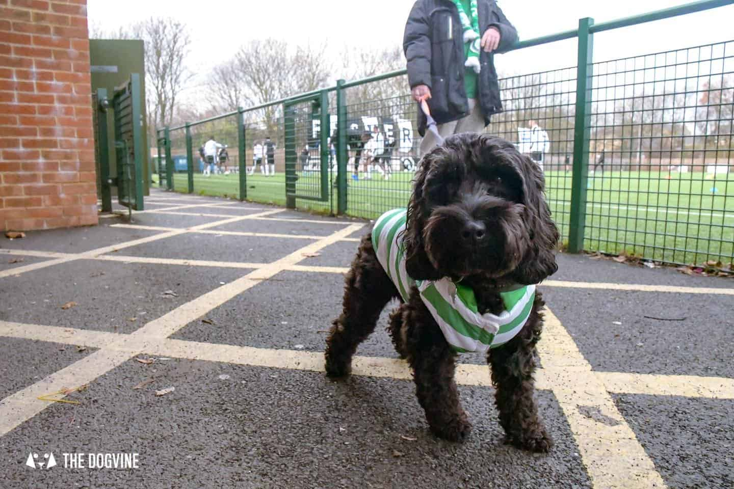 Dog-friendly Football Teams in London 4