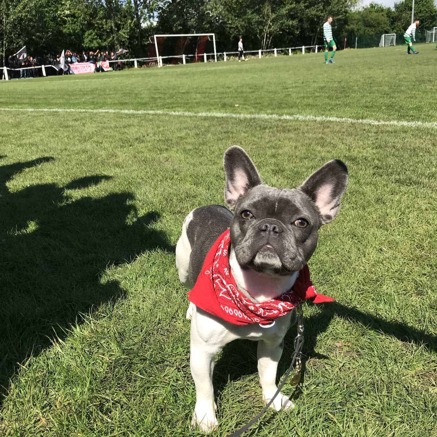 Dog-friendly Football Teams in London - Clapton Community FC