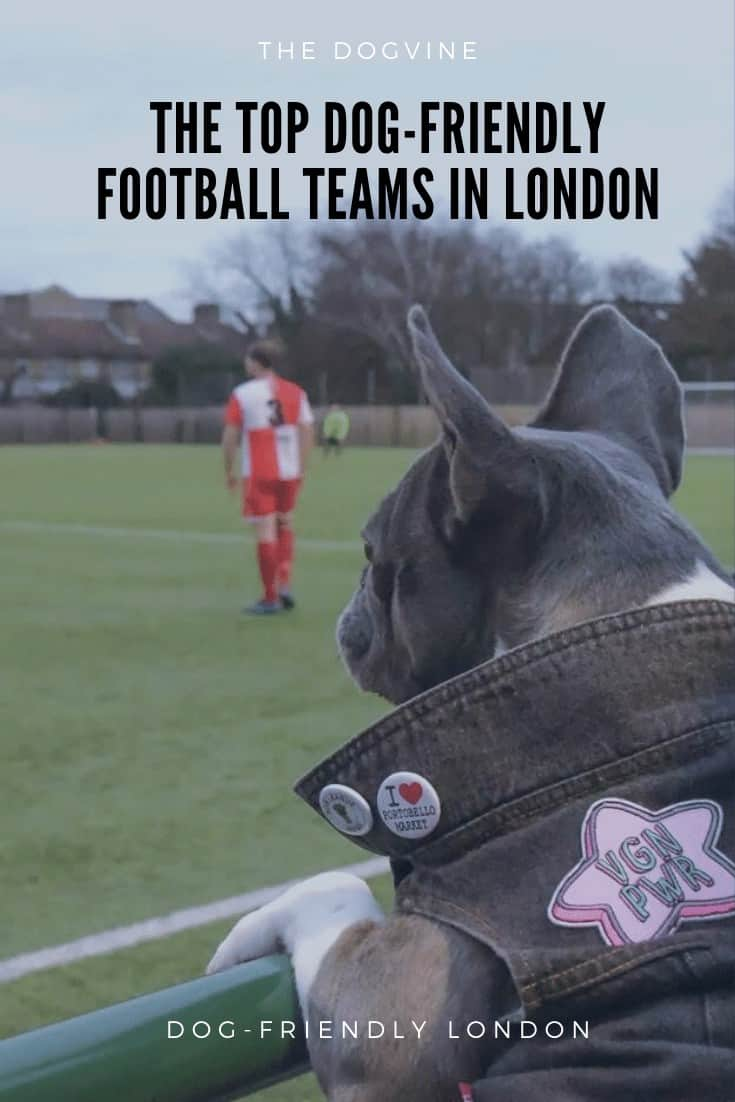 Dog-friendly Football Teams in London - Pie The French Bulldog