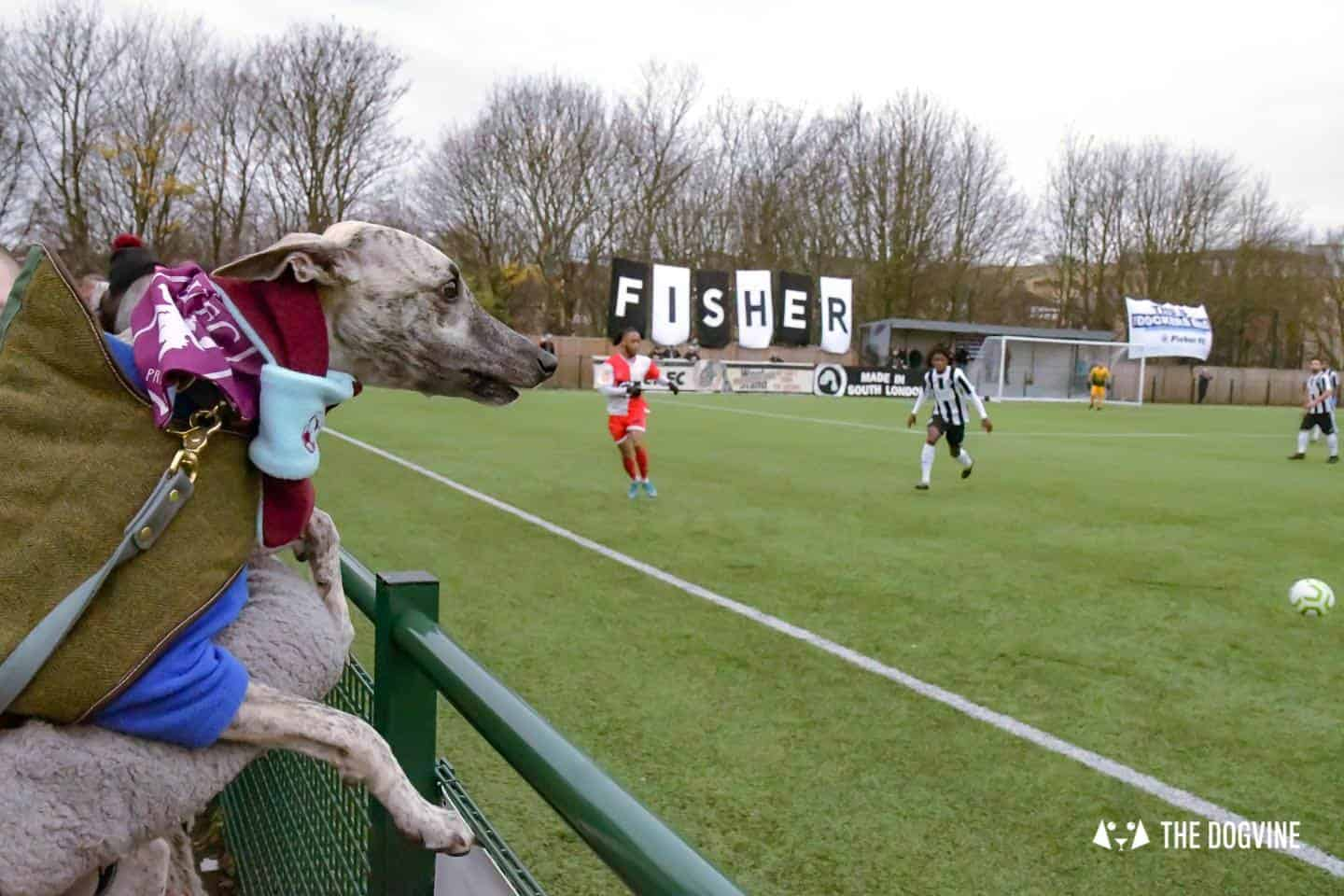 Dog-friendly Football Teams in London - Rolo the Whippet cheers the team on