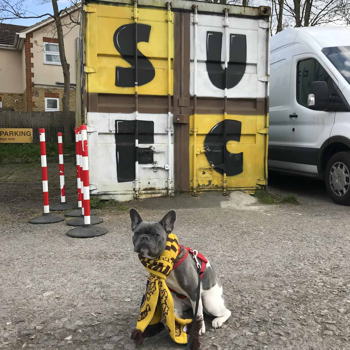 Dog-friendly Football Teams in London - Sutton United FC