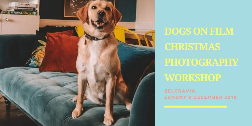 Dogs on Film Christmas Photography Workshop Wild at Heart Foundation