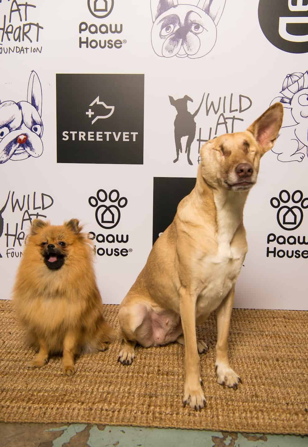 PAAW House X Wild at Heart Foundation party