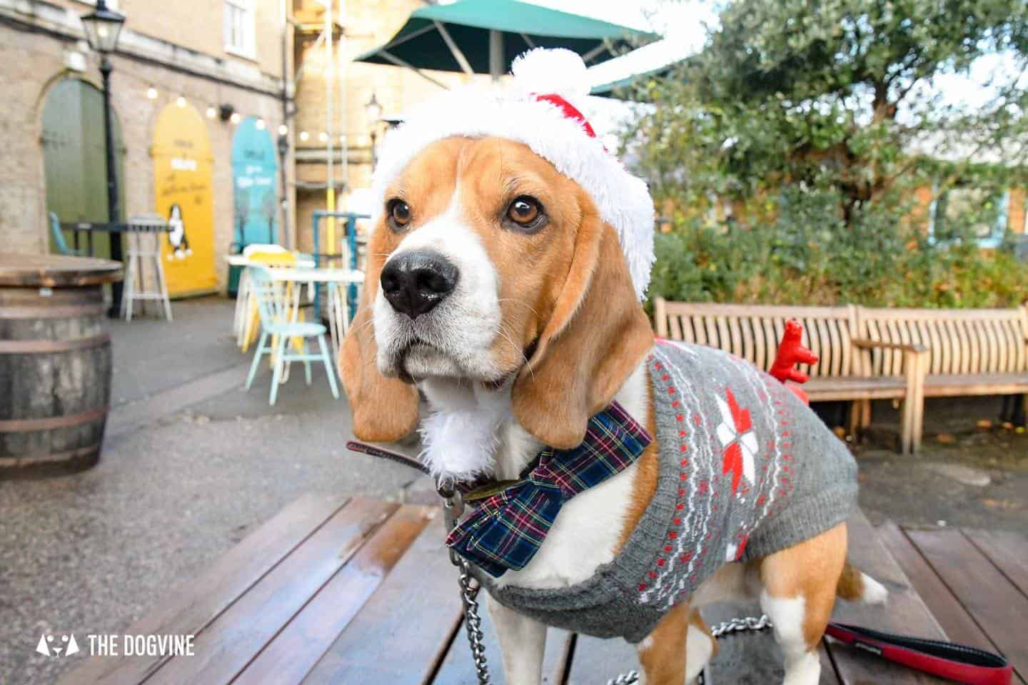 London Dogs In Christmas Jumpers At The Windmill Clapham 10