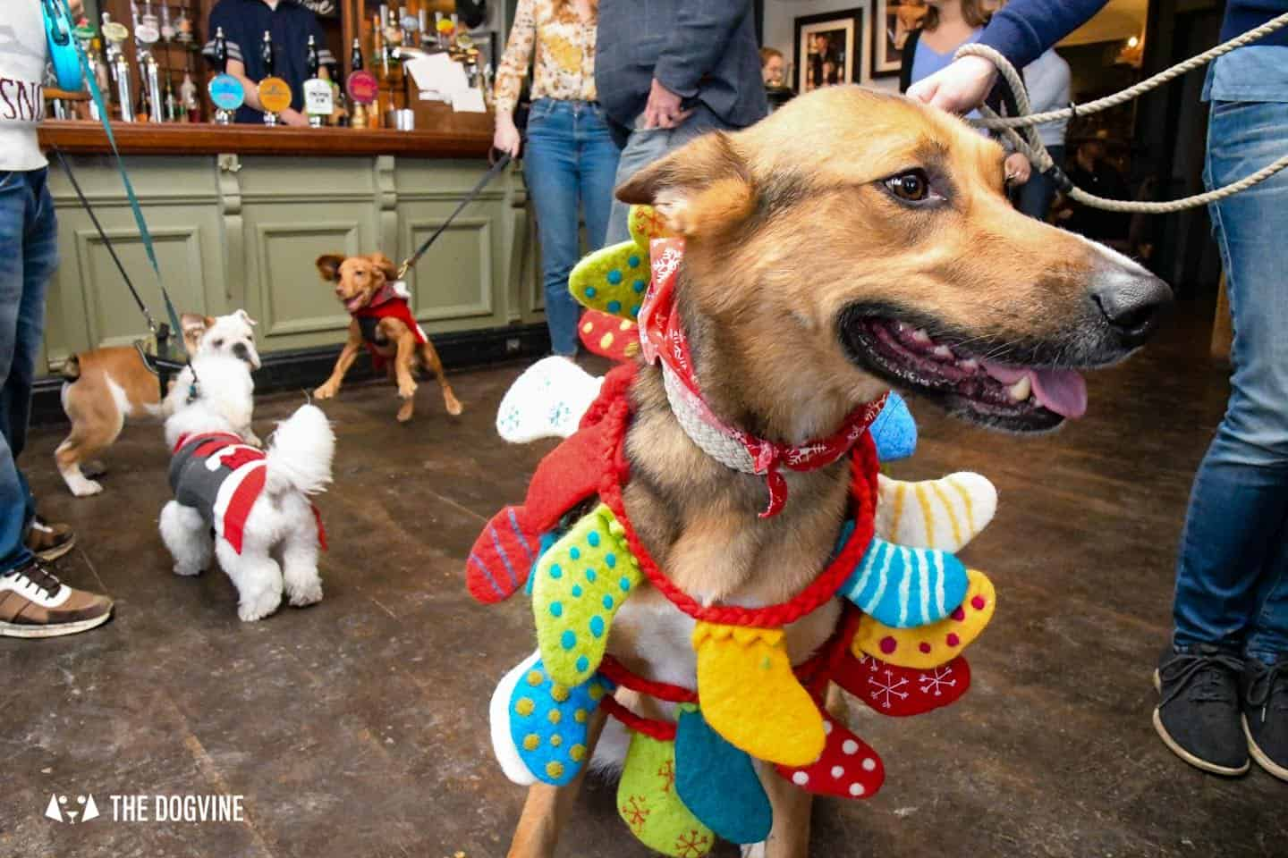 London Dogs In Christmas Jumpers At The Windmill Clapham 16