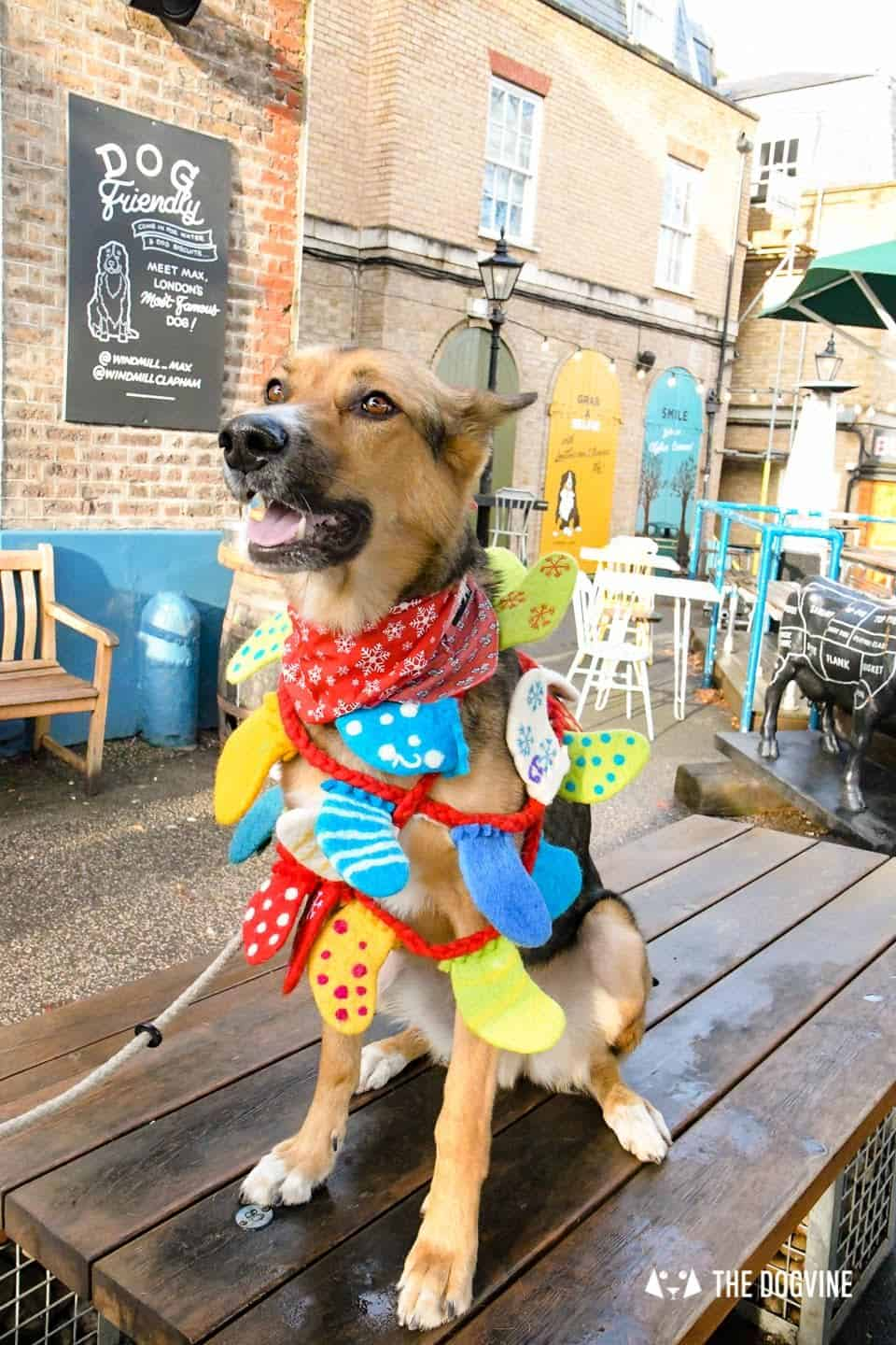 London Dogs In Christmas Jumpers At The Windmill Clapham 18