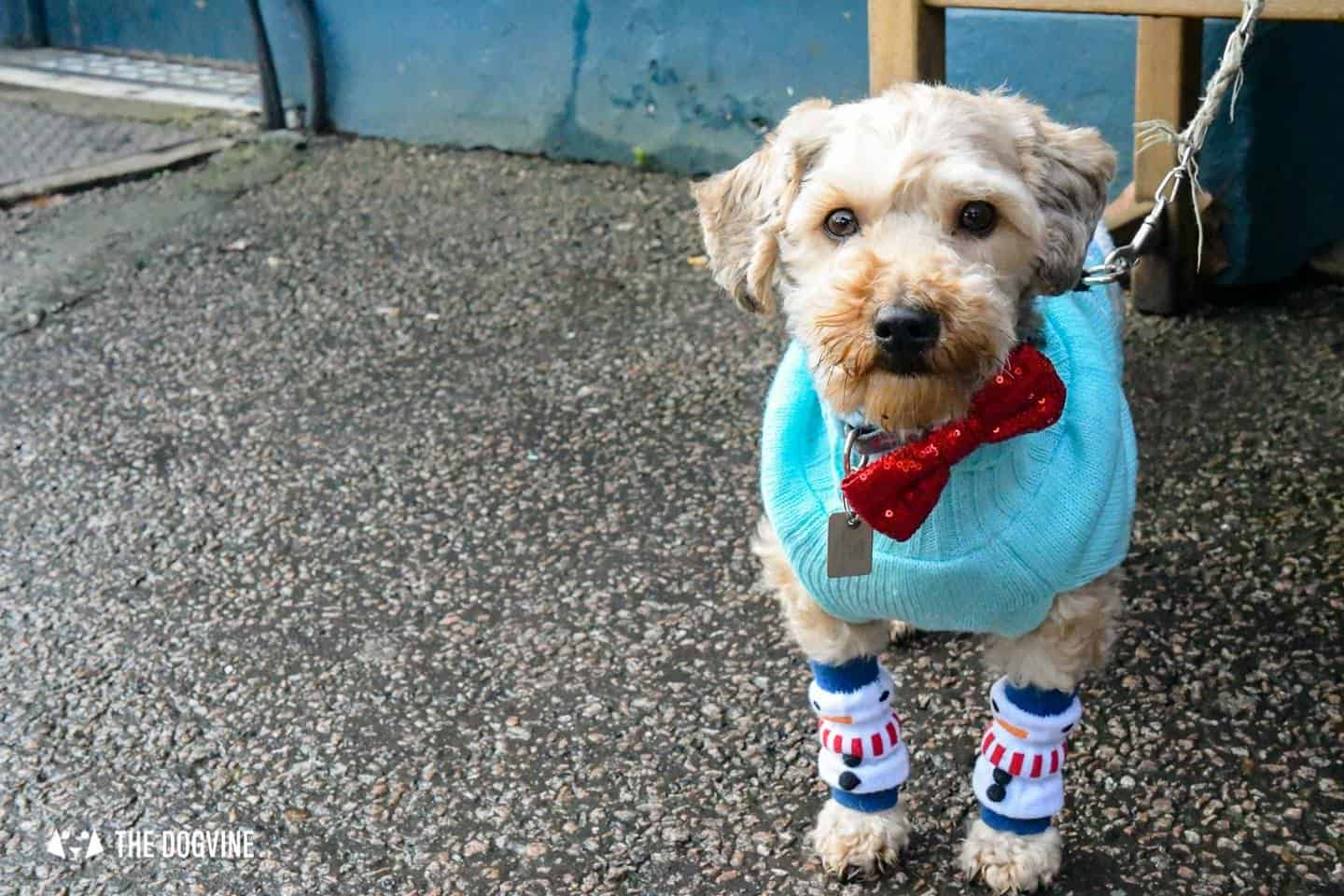 London Dogs In Christmas Jumpers At The Windmill Clapham 32