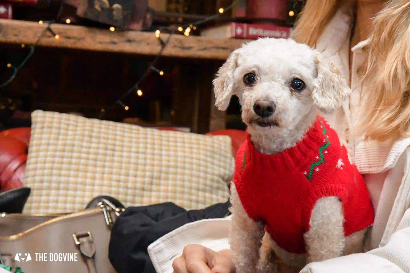 London Dogs In Christmas Jumpers At The Windmill Clapham 33