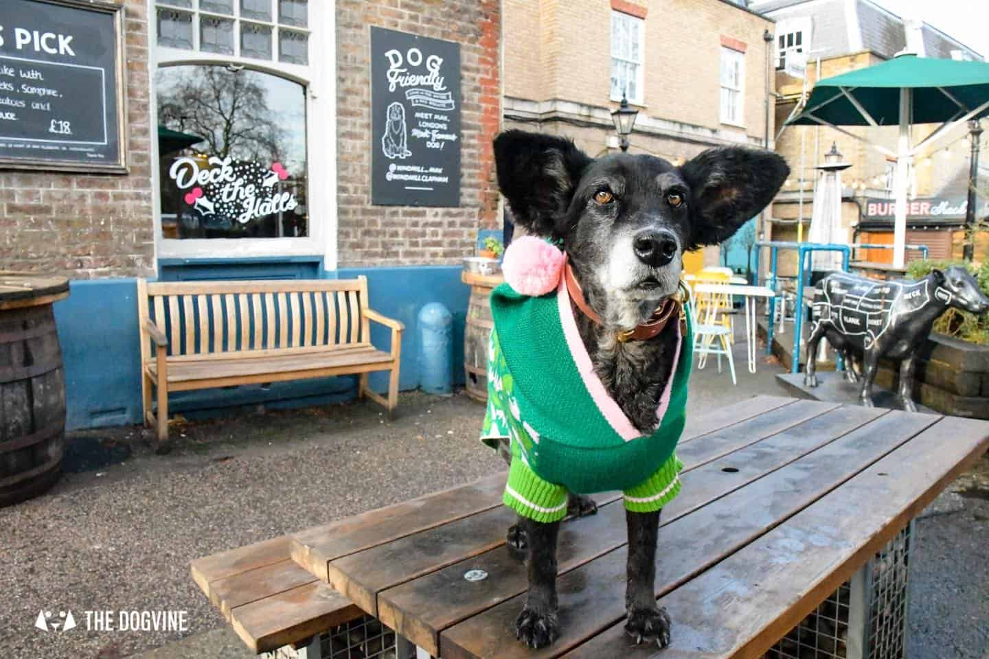 London Dogs In Christmas Jumpers At The Windmill Clapham 39