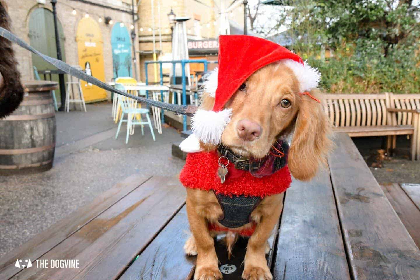London Dogs In Christmas Jumpers At The Windmill Clapham 4