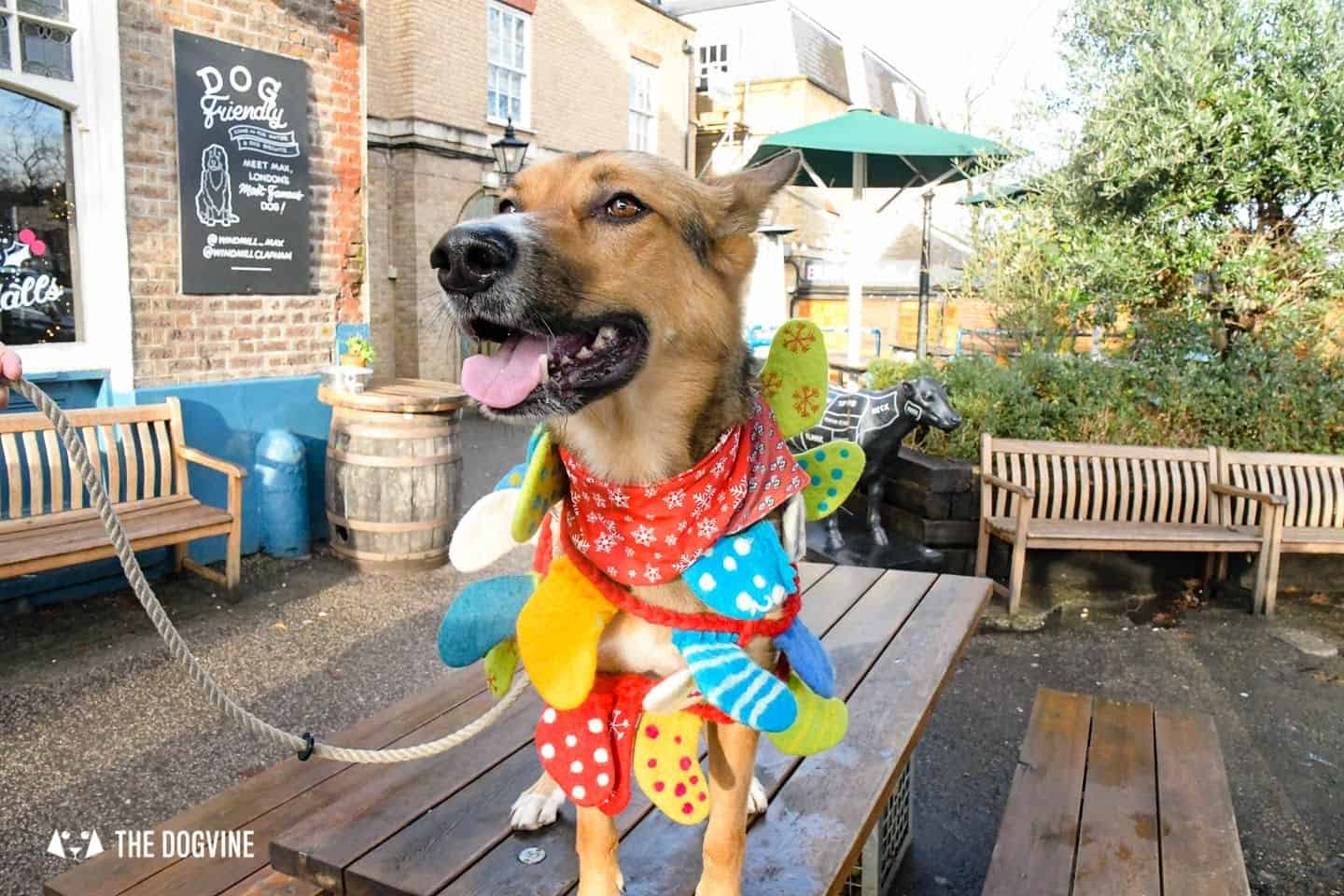 London Dogs In Christmas Jumpers At The Windmill Clapham 40