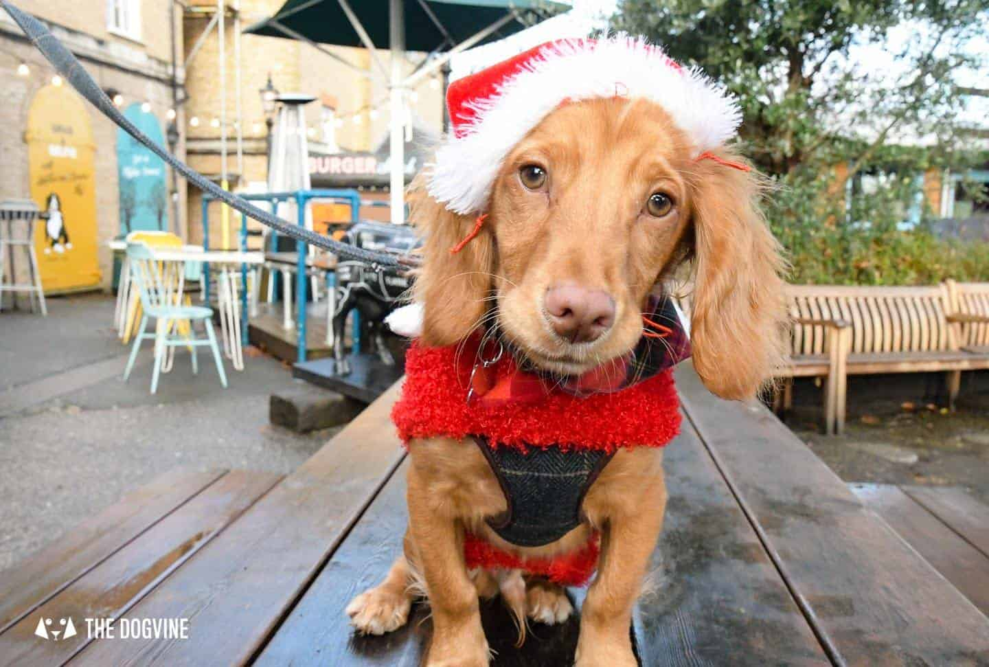 London Dogs In Christmas Jumpers At The Windmill Clapham 5
