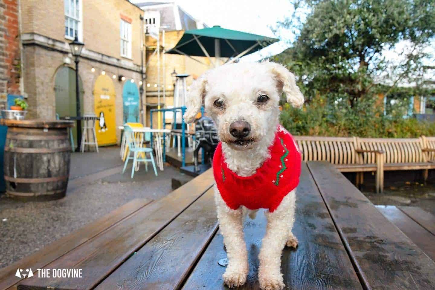 London Dogs In Christmas Jumpers At The Windmill Clapham 7